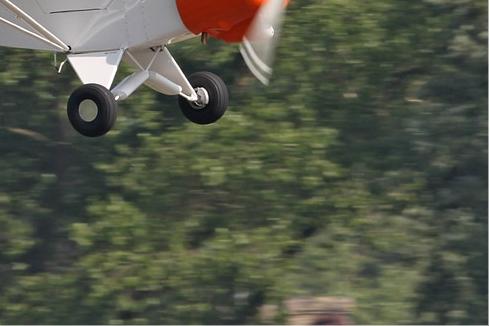Photo#5913-4-Piper L-21B Super Cub