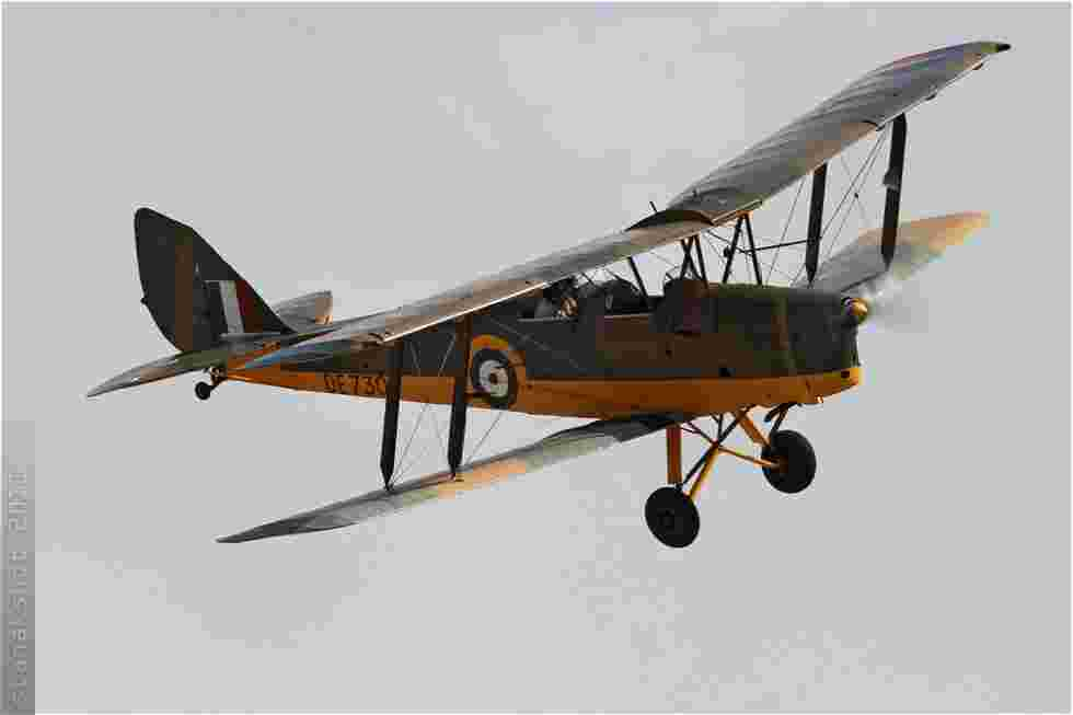 tofcomp#5974-Tiger-Moth-Malte