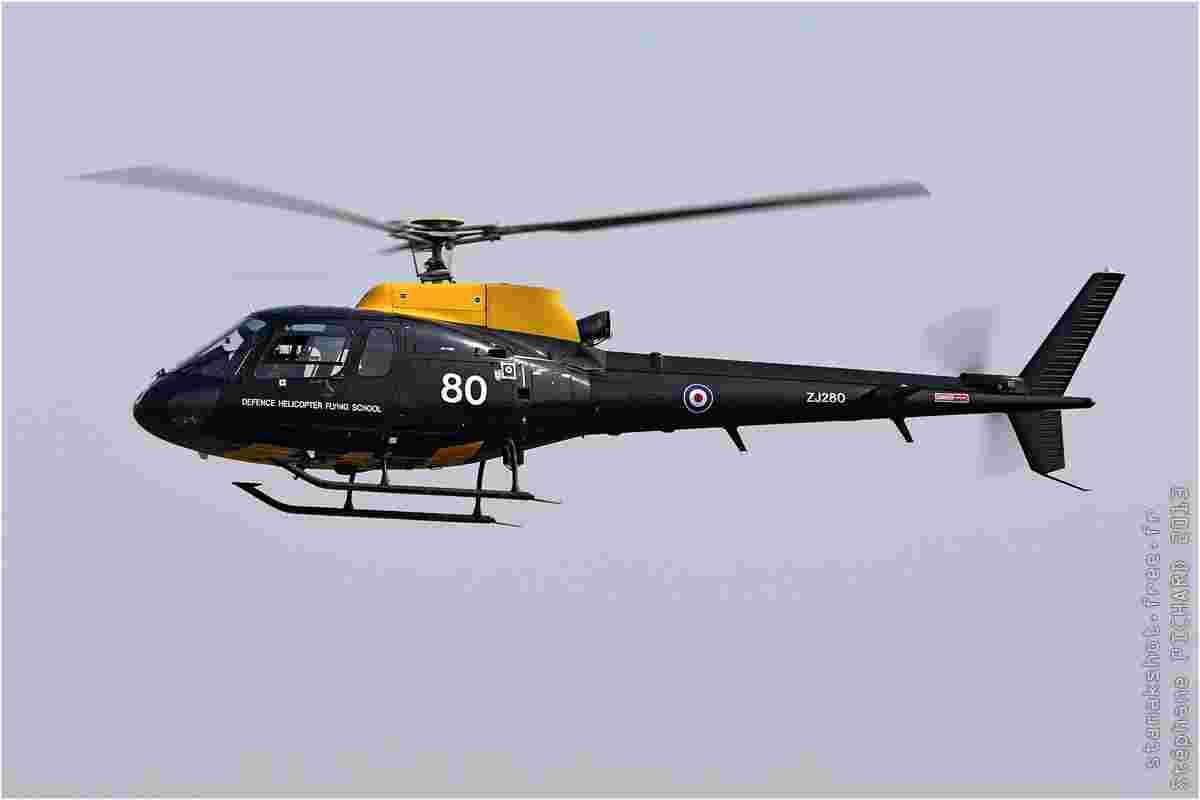 tofcomp#7202-Ecureuil-Royaume-Uni-air-force