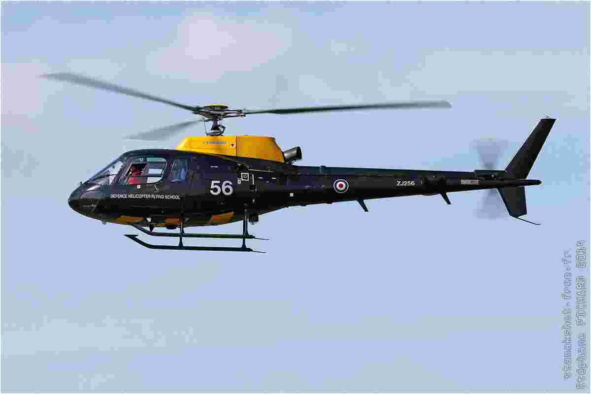 tofcomp#7911-Ecureuil-Royaume-Uni-air-force